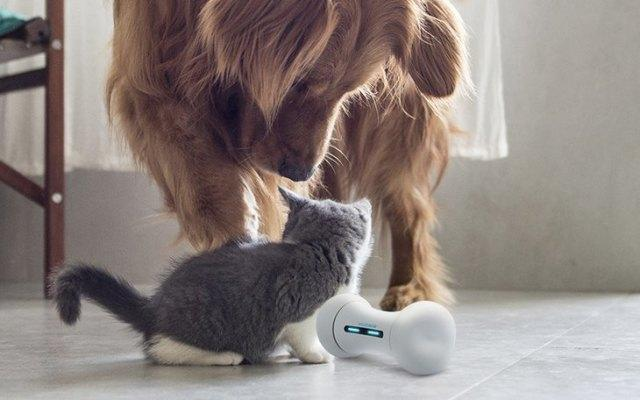 World's First Smart  Interactive Dog Toy
