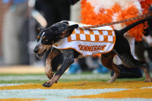 SMOKEY TN VOLS MASCOT EVERYTHING YOU WANT TO KNOW