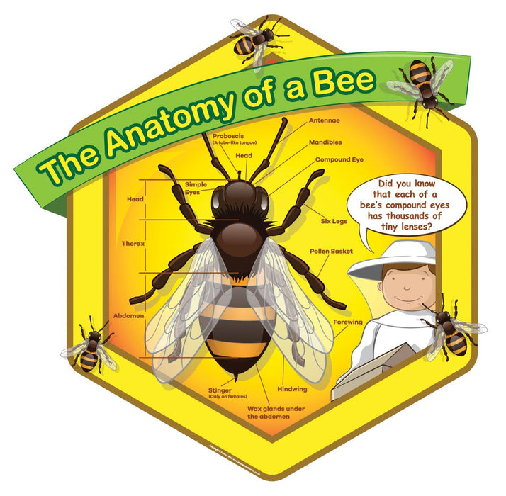 Bee Anatomy Sign