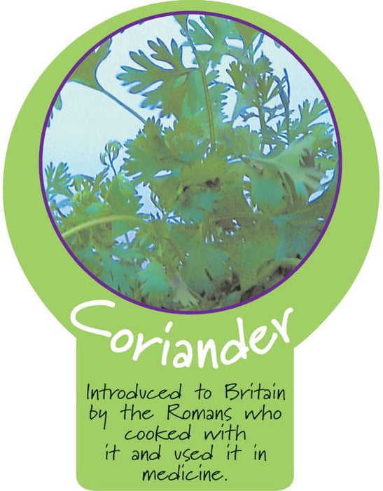 Coriander Paddle Sign