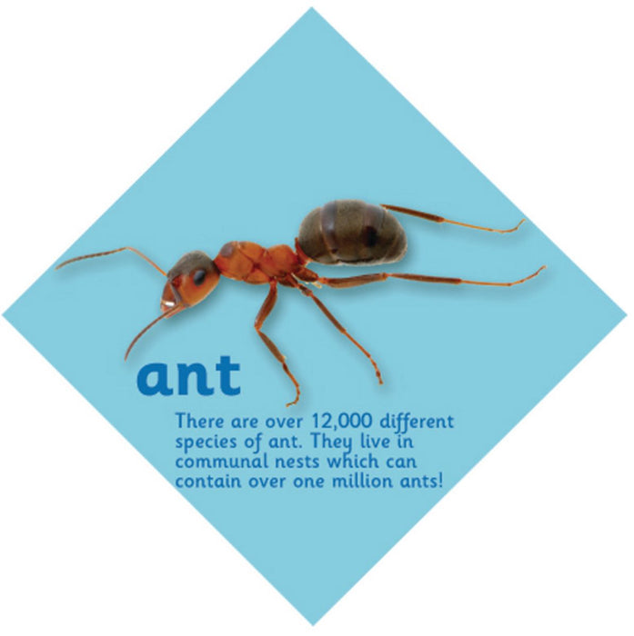 Minibeast sign Ant