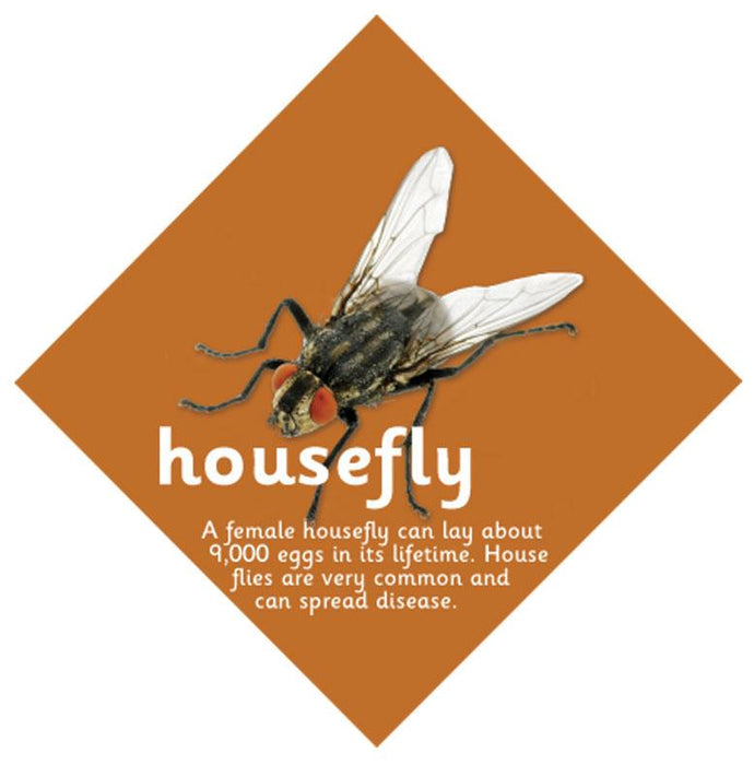 Minibeast sign Housefly