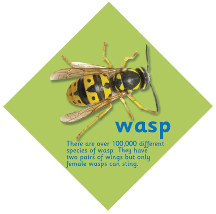 Minibeast sign Wasp