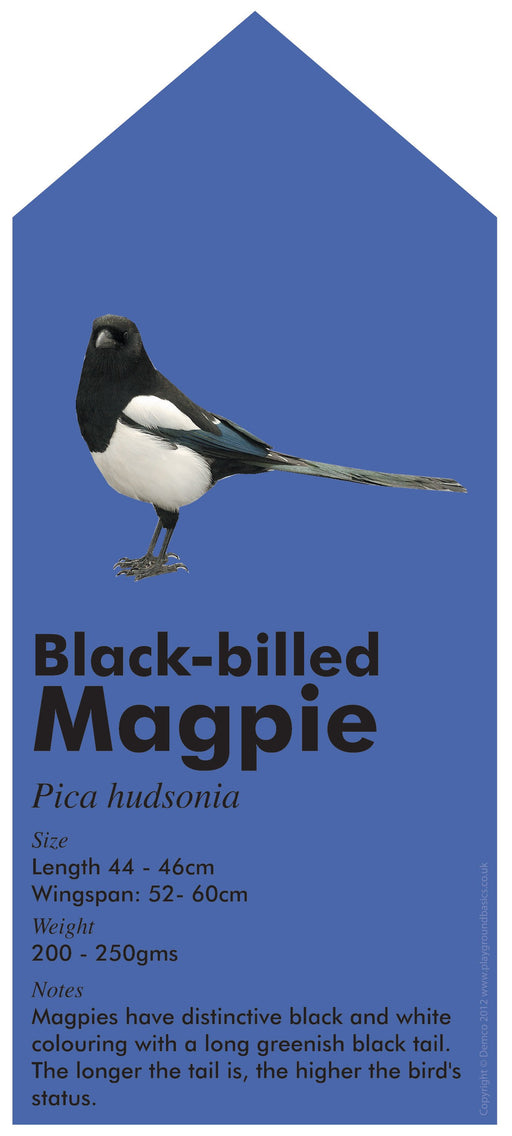 A Rainbow of Garden Birds Magpie