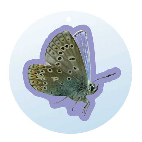 British Butterfly Mirror Dangles