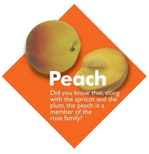 Fruit Diamond Signs - Peach