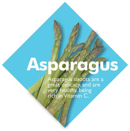 Vegetable Diamond Signs - Asparagus / Large