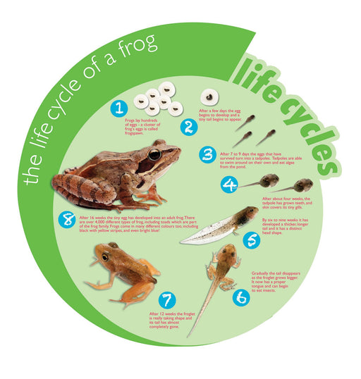Circular Life Cycle Sign Frog