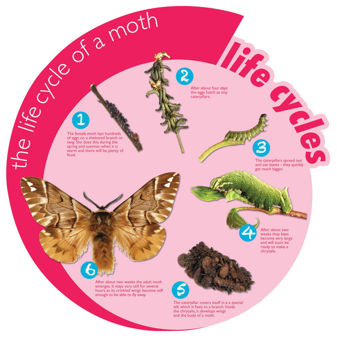 Circular Life Cycle Sign Moth