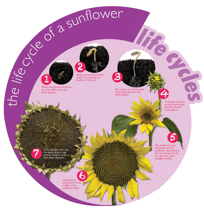 Circular Life Cycle Sign Flower
