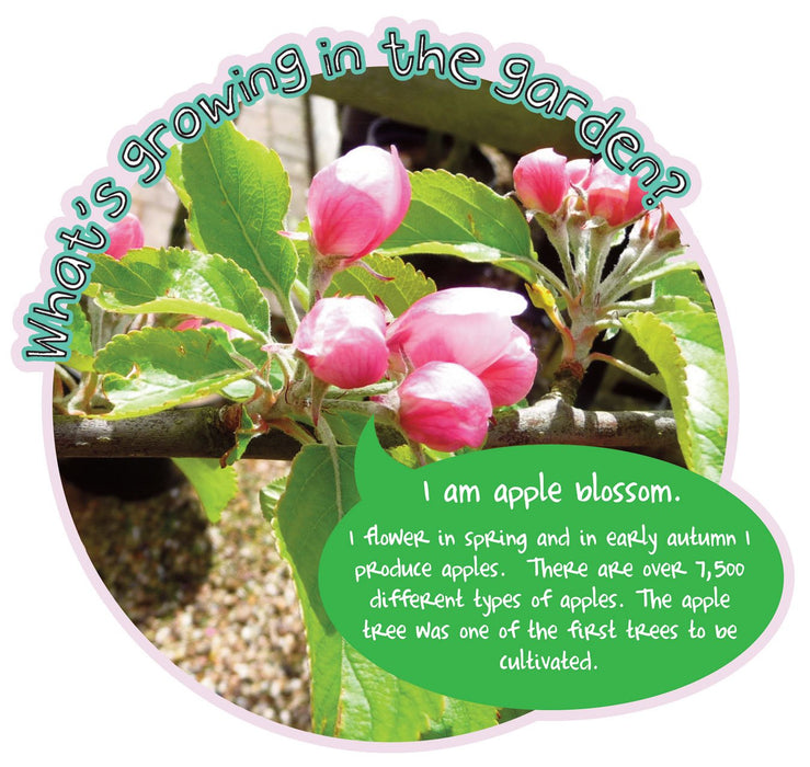 Grace's Garden Plant sign Apple Blossom