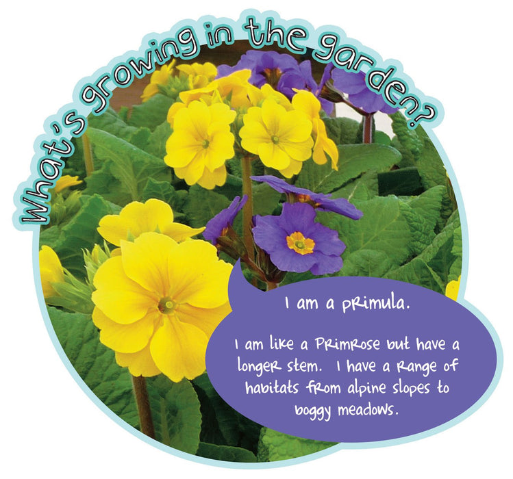 Grace's Garden Plant sign Primula