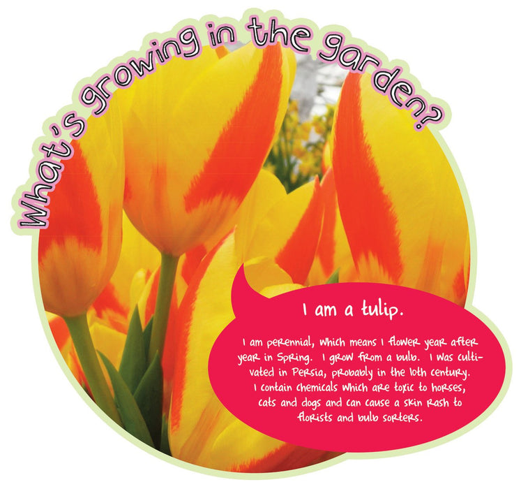 Grace's Garden Plant sign Tulip