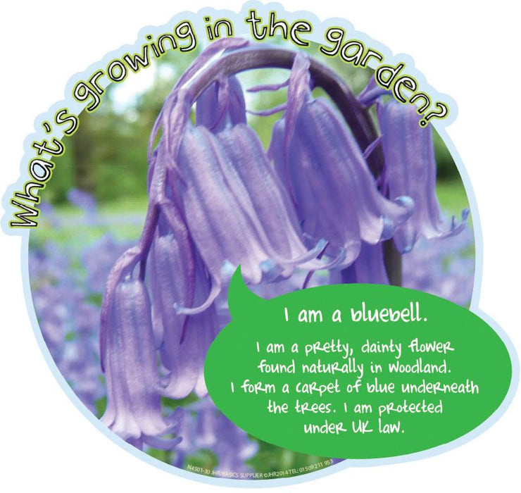 Grace's Garden Plant sign Bluebell