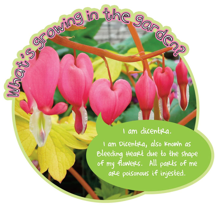 Grace's Garden Plant sign Dicentra