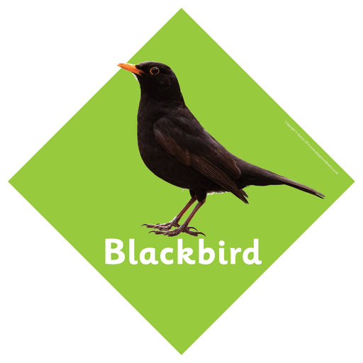 British Birds Signs Blackbird
