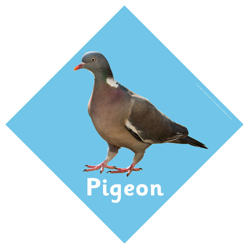 British Birds Signs Pigeon