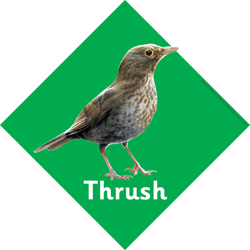 British Birds Signs Thrush