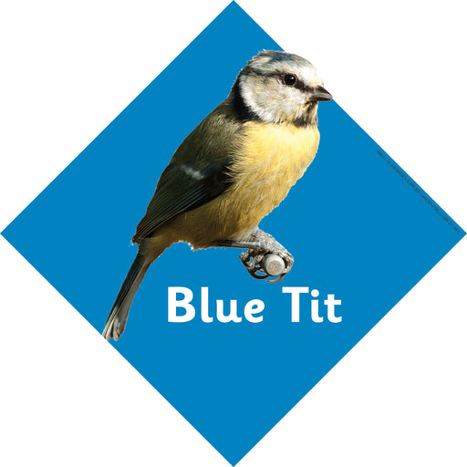British Birds Signs Blue Tit
