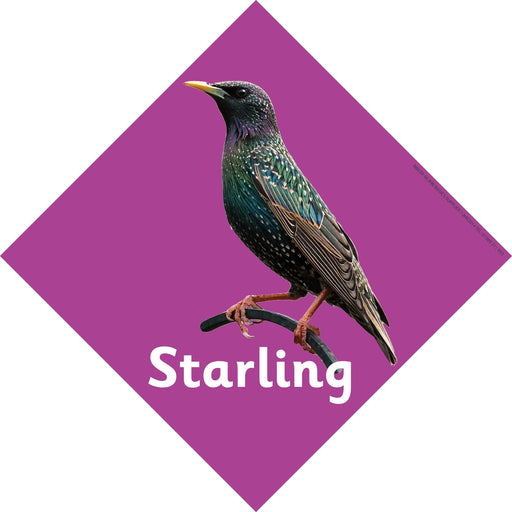 British Birds Signs Starling
