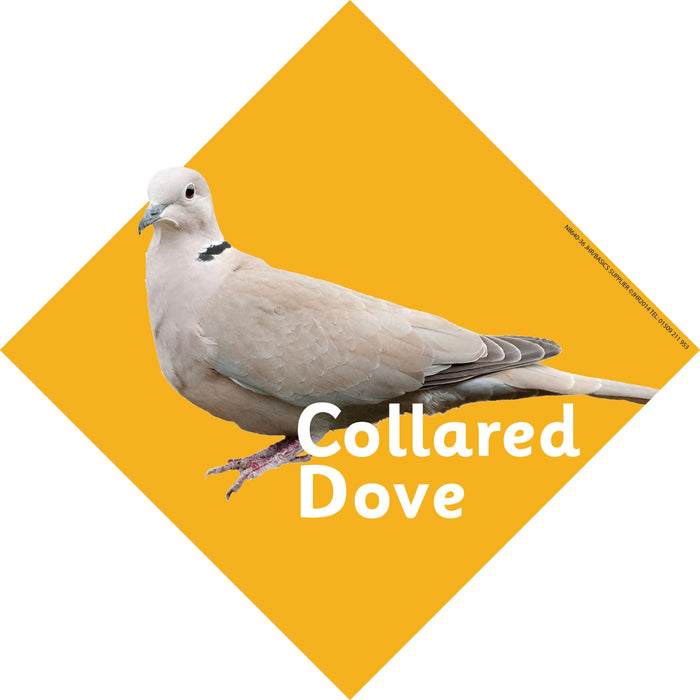 British Birds Signs Collared Dove