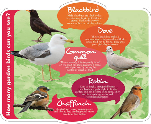 Nature Detective Birds Sign