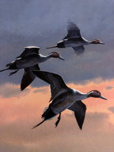 Load image into Gallery viewer, John P. Cowan - Wetlands Pintails - Duck Hunting 2001 - Framed Lithograph - Print Size 25.5 x 31 - Frame Size 33 x 39 - Duck Hunting
