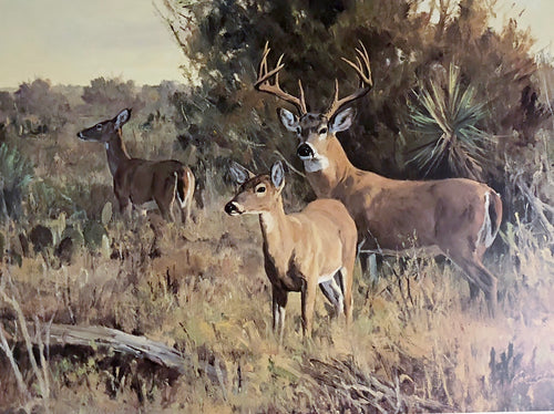 Ken Carlson - Brush Country Escort - Framed Lithograph - Print Size 20.5 x 27.5 - Frame Size 28 x 36 - Whitetail Deer