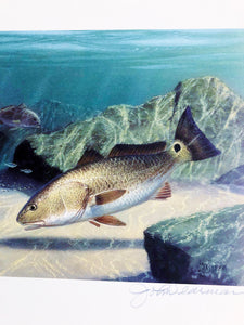 John Dearman - 2006 Texas Saltwater Stamp Print and Stamp - RedFish - Framed Stamp Print- Image 12.5 x 14