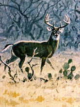 Load image into Gallery viewer, John P. Cowan - Coming to Horns - Framed GiClee - GiClee Size 22 x 30 - Frame Size 31 x 39 - Whitetail Rattling 1990