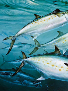 Diane Rome Peebles - 1995 Coastal Conservation Association CCA Stamp Print and Stamp - Framed Stamp Print - Spanish Mackerel - Print Size 12.5 x 14 - Frame Size 17 x 18.5 - Mint Condition with Brand New Custom Sporting Frame