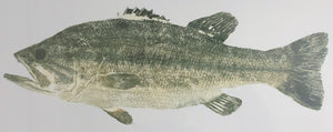 John Morrow - Trophy Black Bass Gyotaku - Framed GiClee - GiClee Size 13 x 30.5 - Frame Size 22 x 39 - Mint Condition