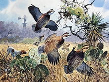 Load image into Gallery viewer, John P. Cowan - 1991 Texas Quail Stamp Print w Double Stamps - Framed Stamp Print - Print Size 12.5 x 14 - Frame Size 17.5 x 18.5 - Texas Quail Hunting