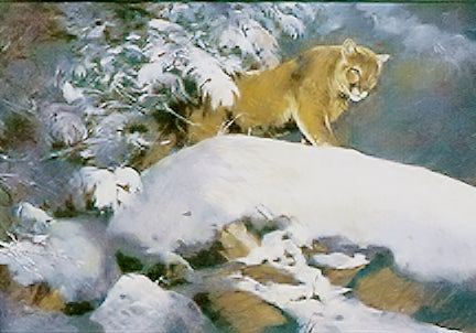 Ken Carlson - Evening Shadows - Framed GiClee - Image Size 20 x 34 - Frame Size 29 x 43 - Magnificent Mountain Lion Scene - Rare