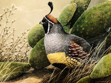Load image into Gallery viewer, Sherrie Russel Meline - 2003 Texas Quail Stamp Print w Double Stamps Artist Proof 74 of 100 Published by The Texas Parks and Wildlife Department TPWD - Framed Stamp Print - Gambrel's Quail - Print Size 12.5 x 14 - Frame Size 17 x 18.5 - Mint Condition