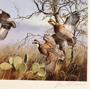 David Maass 1990 Texas Quail Stamp Print & Stamp First of Series Brand New Custom Sporting Frame