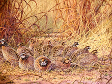 Load image into Gallery viewer, Herb Booth - The Covey - Framed GiClee - GiClee Size 20 x 30 - Frame Size 30 x 40 - Bobwhite Quail Scene