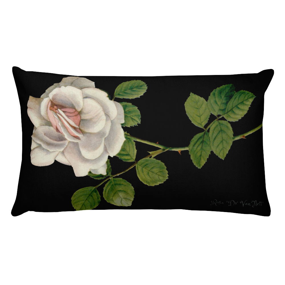 ADDISONIA ZURI Premium Pillow