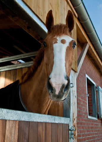 Fly control for horse stables and barns
