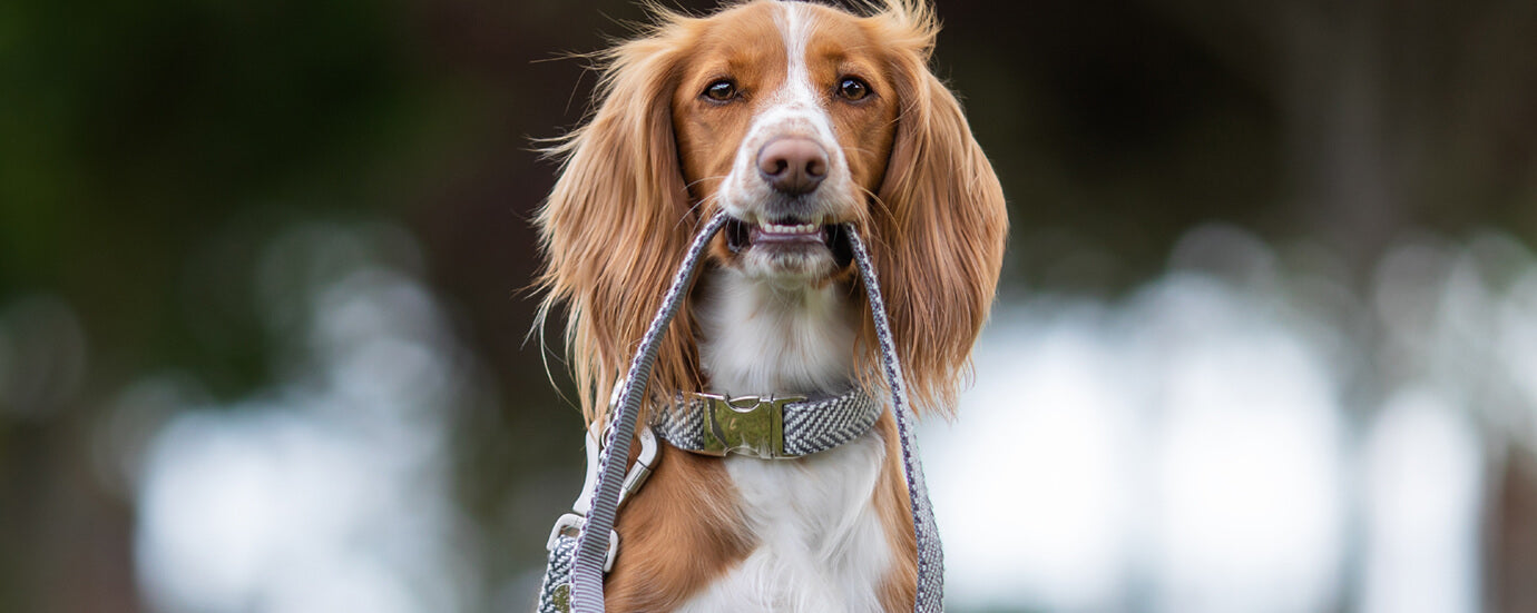View All Dog Leads