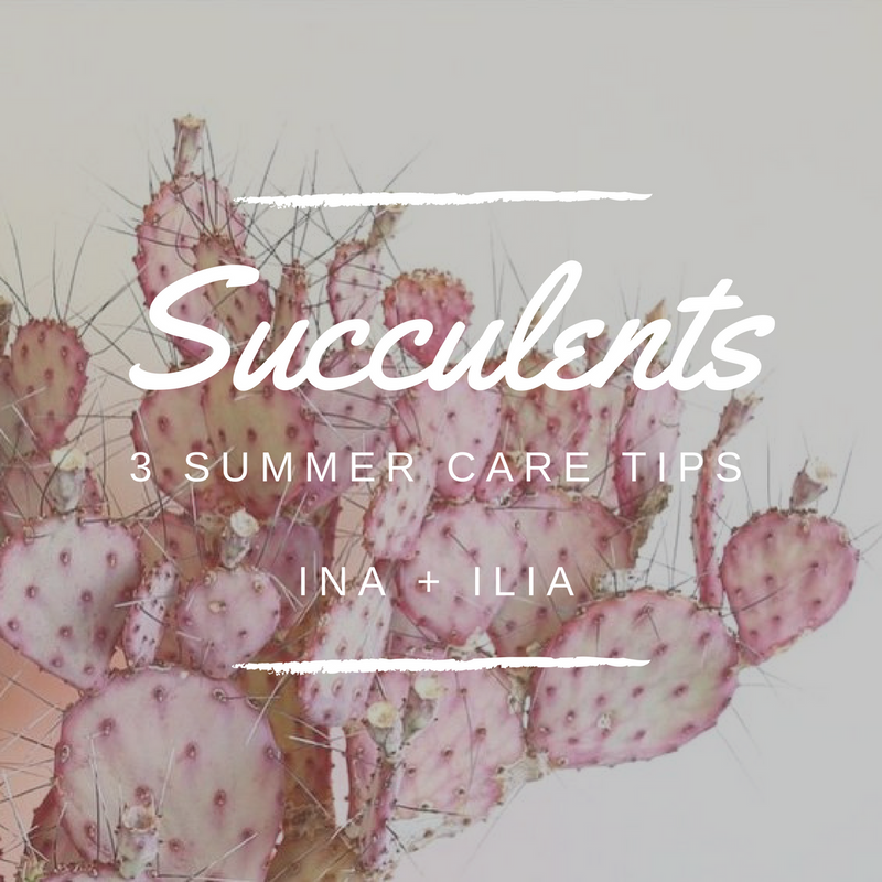 To Thrive // Summer Succulent Care