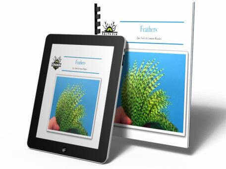 Feathers - Tips, Tricks & Common Mistakes (eBook)