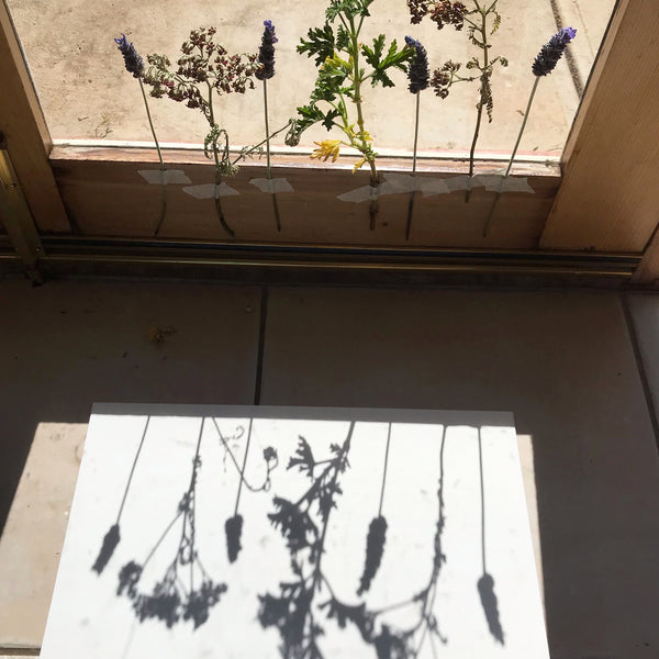 flowers casting a shadow on paper