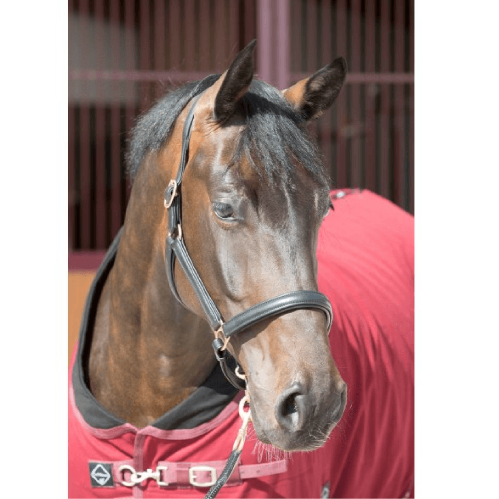 Cambrian padded leather headcollar