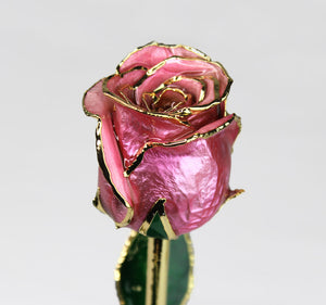 24K Gold Dipped Rose (Pink)