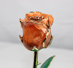 24K Gold Dipped Rose (Champagne)