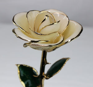 24K Gold Dipped Rose (White)