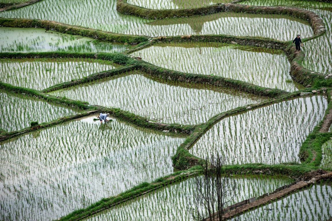 Rice terraces in Guilin