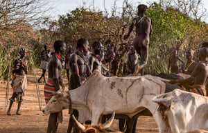 Adolescent ceremony, running on buffalos