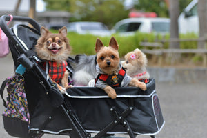 Pet dogs treated as kids in Japan